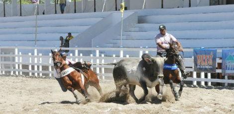 Segundo STF, animais são expostos a maus-tratos nas vaquejadas / Foto: Divulgação