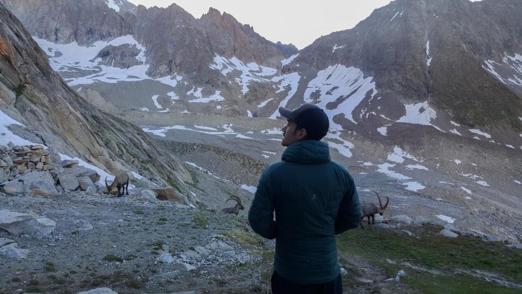 steinbock ibex swiss alps