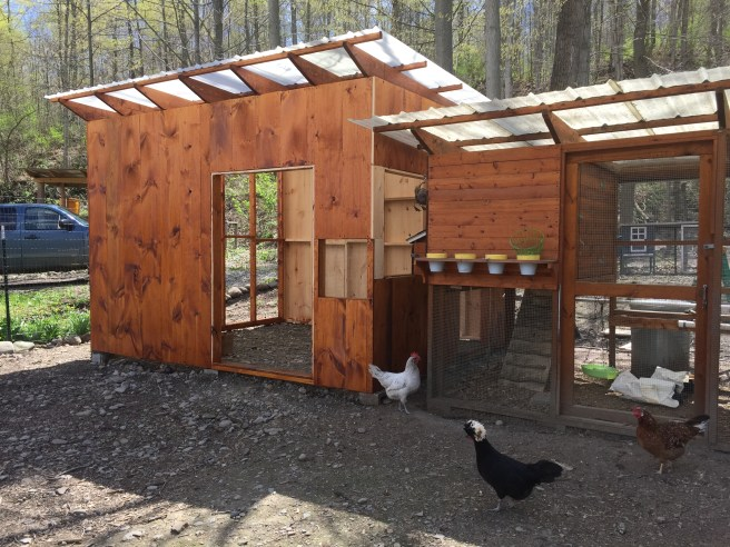 Quail Coop attached to original chicken coop