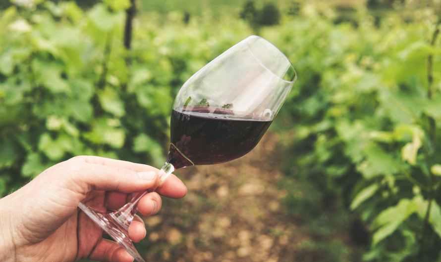 le vin et notre foie