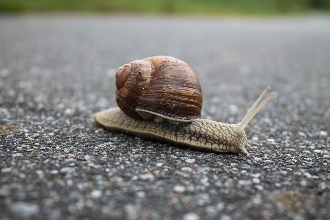 close up of snail on ground