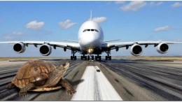 jfk runway turtle crossing airport