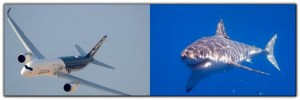 aircraft skin mimics shark skin