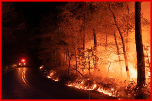 NJ FOREST FIRE