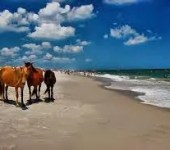 Assateague Island – Wind, Waves, and Wild Horses