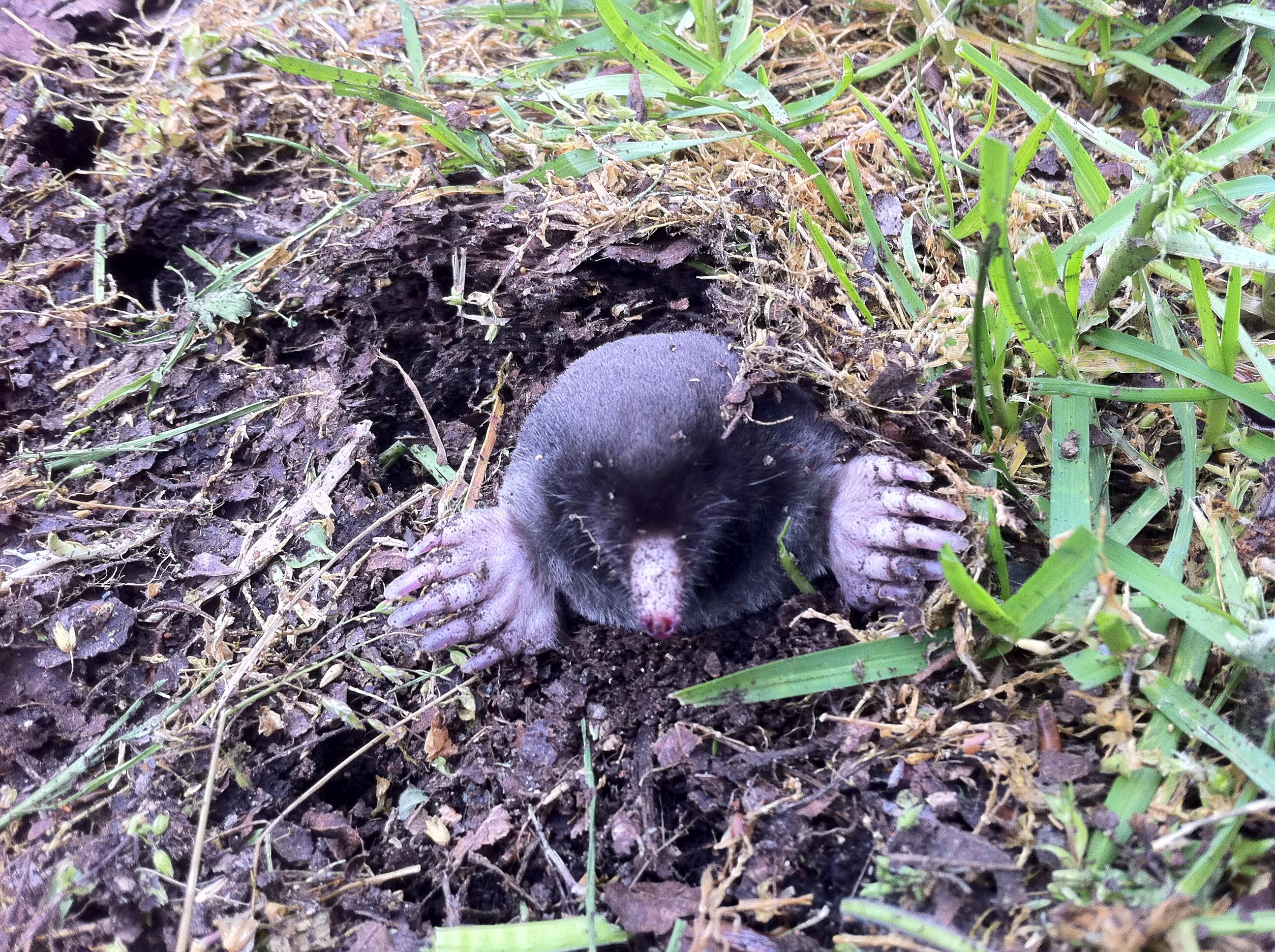 Drive Baby Drive Wheels Baby Birds Dead Moles
