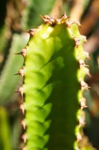 Cactus zags