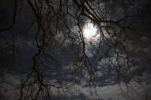 moon, tree, sky, no tripod