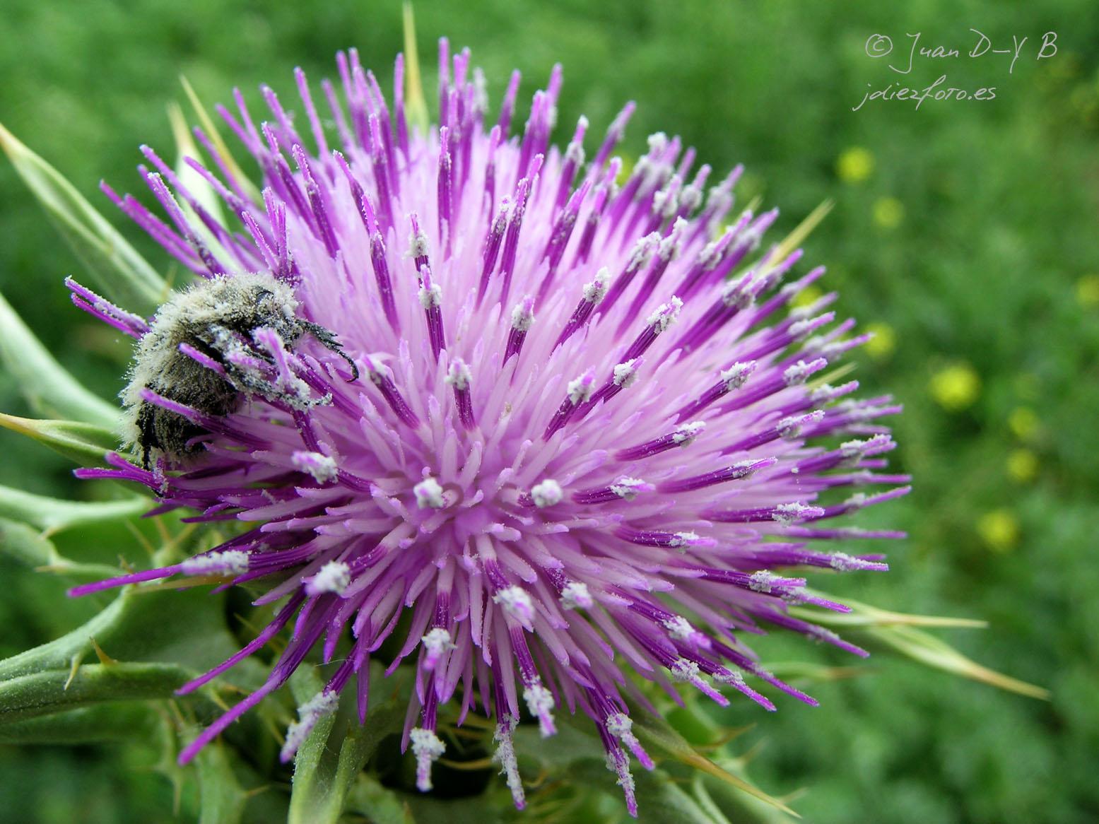 La polinización, una de las maravillas de la naturaleza