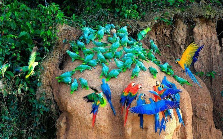 guacamayos-lago-sandoval