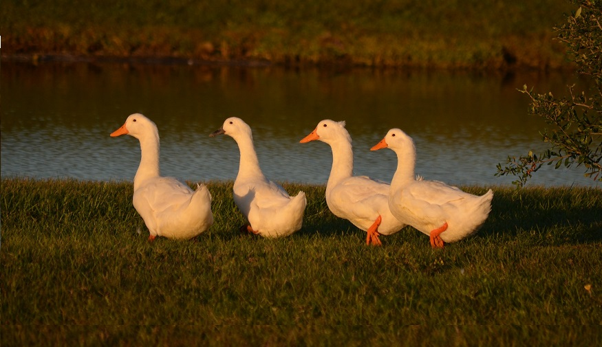 continuity - keep your ducks in a row
