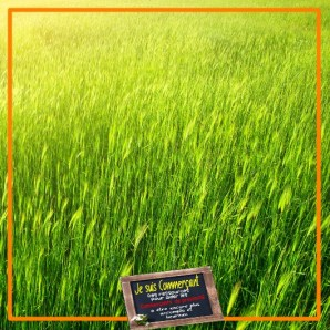 vacances commerçant herbe plus verte