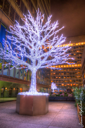 Christmas tree in Toronto