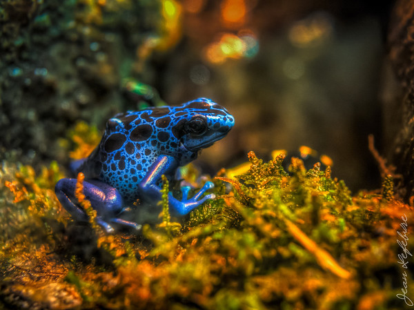 Blue frog at Museum of Nature