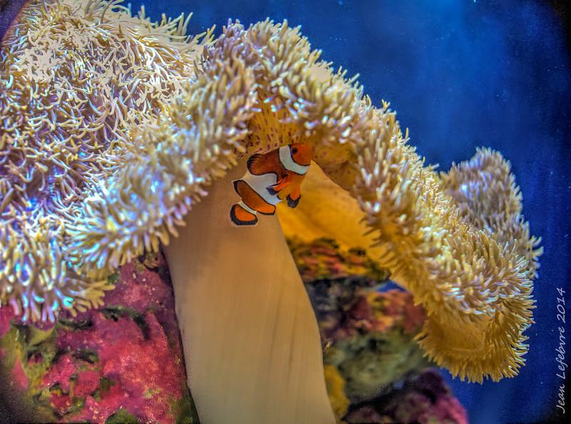 Here's Nemo