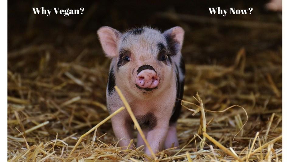 ::My Journey to a Vegan Diet::
