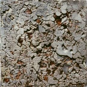 Pigne 03, 1997