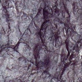 Dépouille 02 (détail), 2001