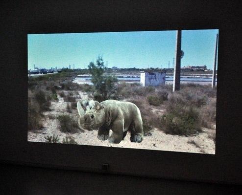 Rhinocerotopia, 2010