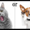 Cats or Dogs? by Jean Brashear