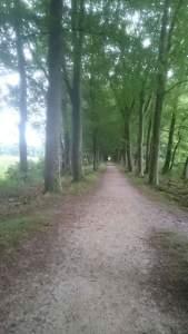 natuurschoon bos