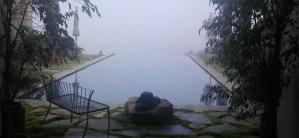 Joy Gardens Misty Morning