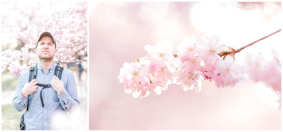 Københavns kirsebærstræer til foråret 2019 på bispebjerg kirkegaard