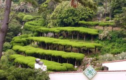 green_terraces
