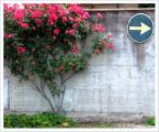 red bush against wall plus arrow