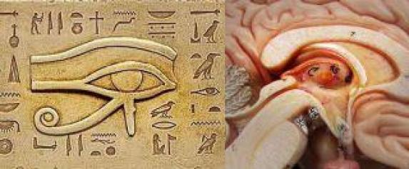 medulla pineal activation