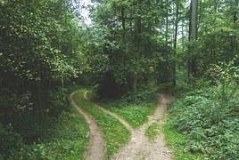 woods-768753__180