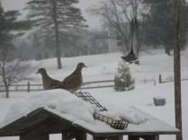 Dove erasure - see upper right