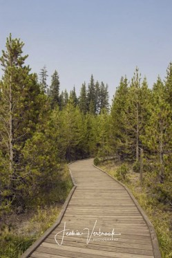 Path through the forest Yellowstone National Park 2017