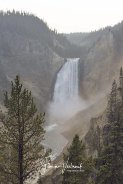 The Lower Falls in Yellowstone National Park 2017