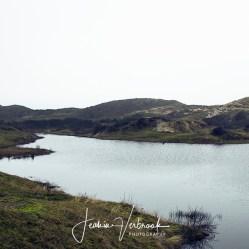Dragonfly lake Meijendel