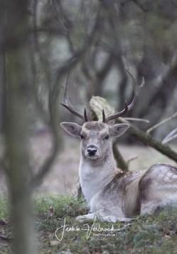 Deer AWD 2017