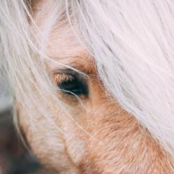 Veluwe wild paard