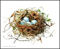 Catbird Nest, watercolor, 8x10