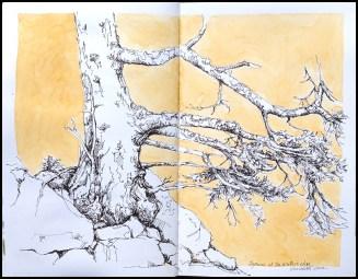 08_DeerIsle_Spruce