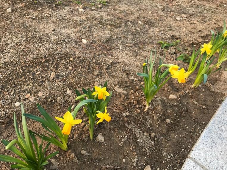 꽃이 움트는 봄. Flowers just started to bloom.