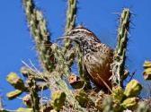 Cute little bird sitting in a cactus.
