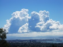 This is a side view of big cumulous clouds and their cauliflower-like puffy tops.