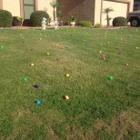 Eggs in a front yard.