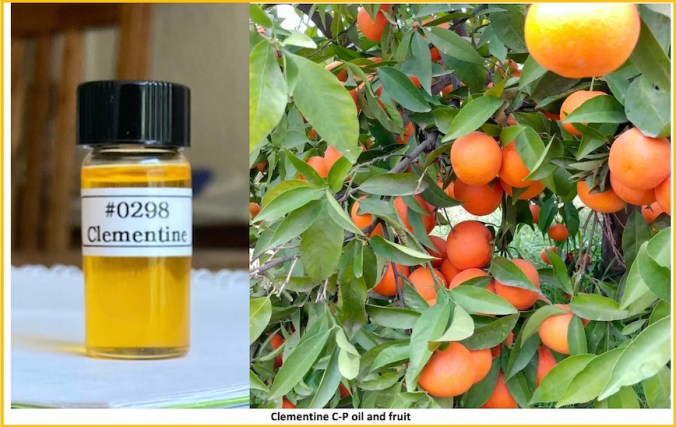 A photo of Clementine oil showing color and clarity with some fruit Clementine