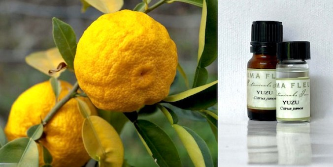 A photo of yuzu fruit and the oil distilled from the peel.
