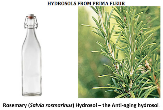 a bottle of colorless Rosemary hydrosol and the bush it came from.