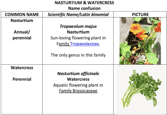 Chart of the difference between Nasturtium and Watercress