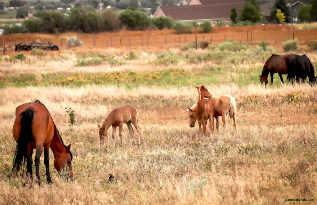 Horses and colts grazing in a pastoral field