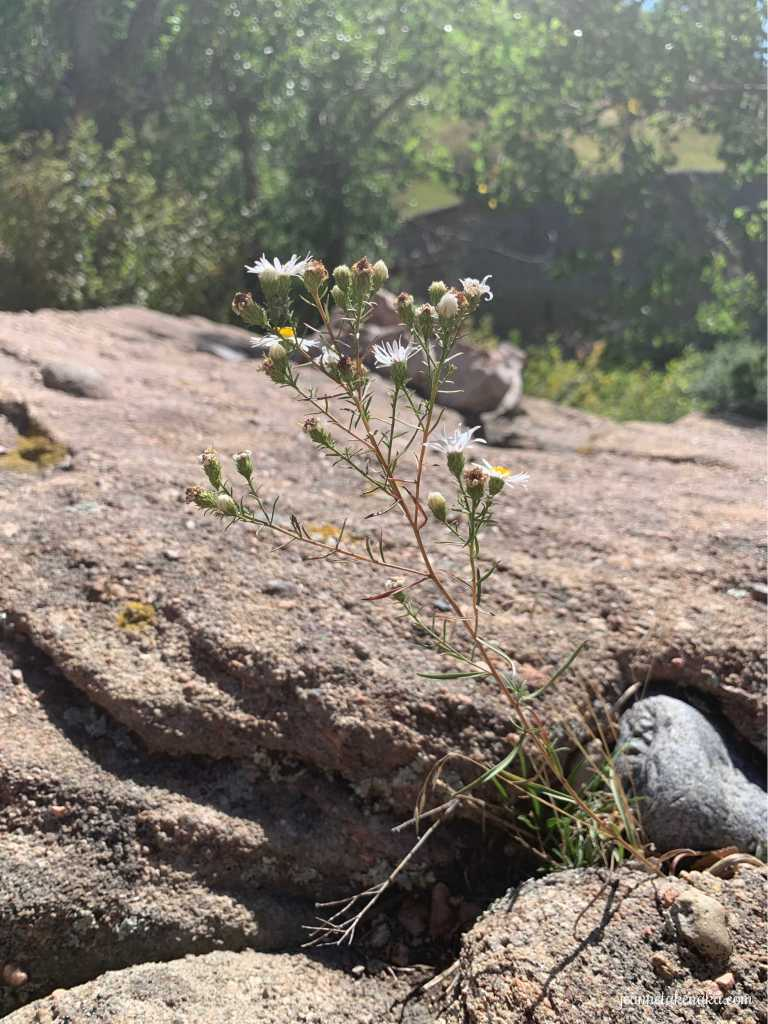 Wildflowers growing out of rocks . . . symbolic of how we sometimes find our refuge in unusual situations