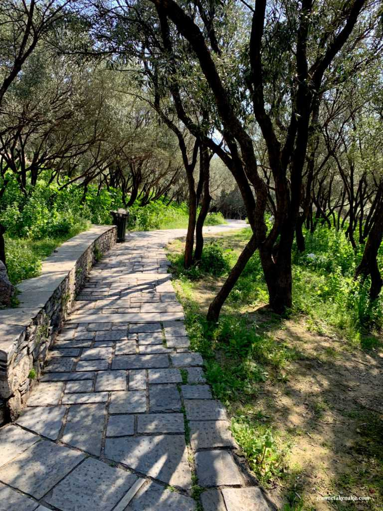 A cobblestone path lined with olive trees . . . reminiscent of something similar to what Jesus may have walked in His triumphal entry